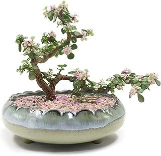 Dahlia 8'' Inch Large/Shallow/Wide Drip Glazed Ceramic Planter/Succulent Pot/Plant Pot, Gray