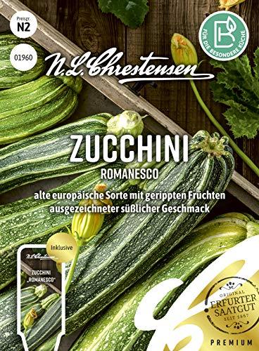 Zucchini Romanesco, alte europäische Sorte mit gerippten Früchten, Samen
