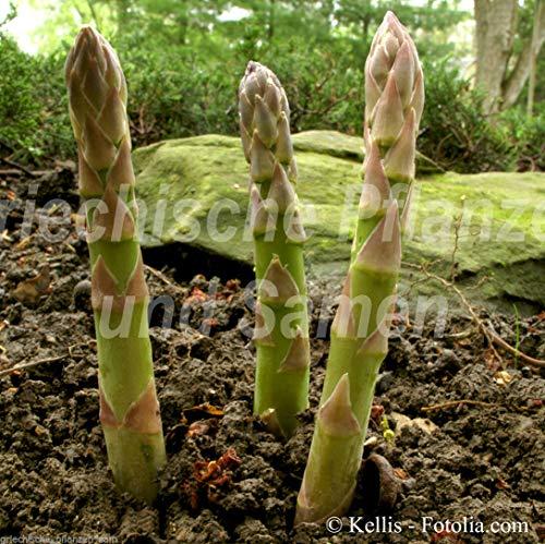 FERRY HOCH KEIMUNG Seeds Nicht NUR Pflanzen: Spargel Grüner Grünspargel 20 Healthy Deli Kultur 10-20 Jahre
