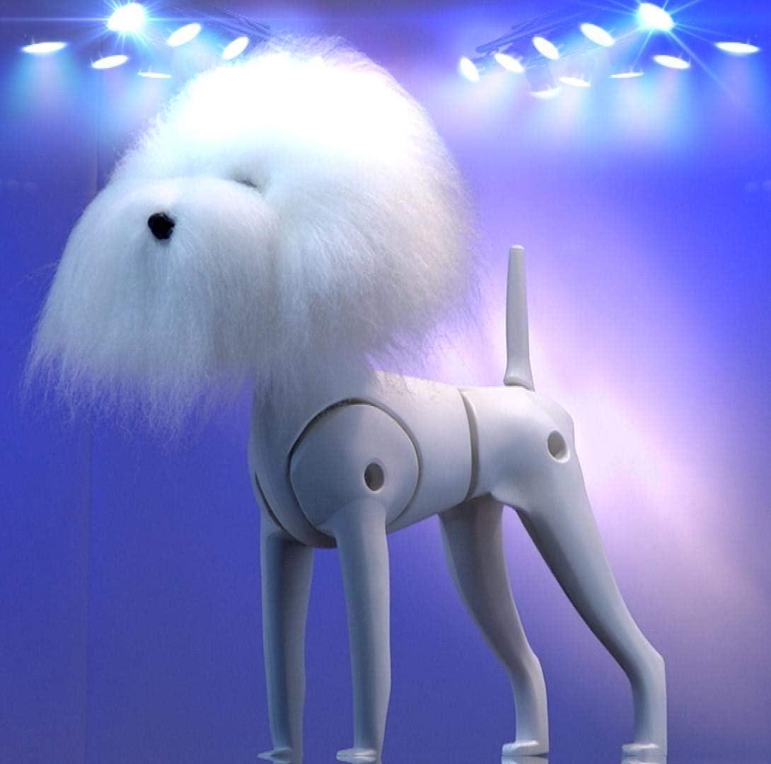 estructura de perro para hacer peluqueria canina con pelo en cabeza