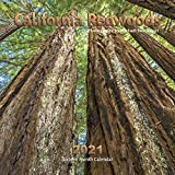 California Redwoods Calendar 2021