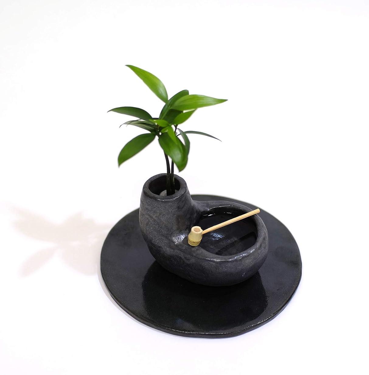 アクセント近代化する生き返らせる「良縁を結ぶ梛(ナギ)の木」と 陶房「うさぎ庵」特製手作 「たまり石盆景」 【土なし 清潔 水やり簡単 セラハイト】