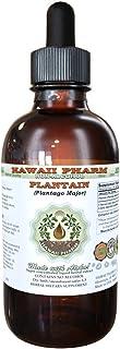 Plantain Alcohol-Free Liquid Extract, Organic Plantain (Plantago Major) Dried Leaf Glycerite Natural Herbal Supplement, Ha...