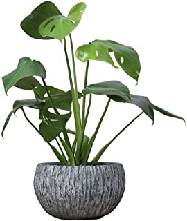 MRFX Succulent Breathable Green Radish Copper Grass Office Water Culture Daffodil Nordic Home Green Plant Desktop Flower Pot Water Glass Fiber Reinforced Plastic Material