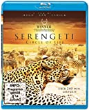 Serengeti - Circle of Life (Blu-ray) - Löwen