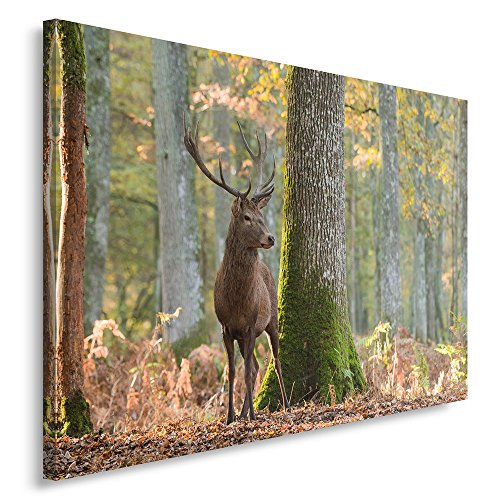 Feeby. Wandbild - 1 Teilig - 70x100 cm, Leinwand Bild Leinwandbilder Bilder Wandbilder Kunstdruck,...