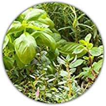 Amazon.es: Albahaca