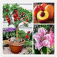 2ピーススウィートピーチ種子、ピーチツリー種子、ドワーフボナンザピーチ、盆栽フルーツ種子用ホームガーデン種子