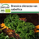 SAFLAX - BIO - Cavolo riccio - Westland Winter - 70 semi - Brassica oleracea var. sabellica