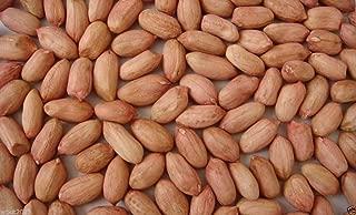 Peanut Seeds~jumbo Virginia