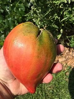 Temura 15 Australian Giant Ox Heart 15 Heirloom Tomato Seeds 1376