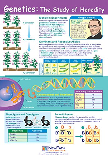 NewPath Learning Genetics: The Study of Heredity Poster - Laminated, Full-Color, 23' x 35' (34-6110)