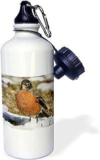 "3dRose wb_116915_1""American Robin Turdus migratorius Bird Photo Animal Photography"" Sports Water Bottle, 21 oz, White"