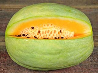 Best desert king watermelon Reviews