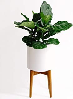 Large Mid Century Modern Glossy White Planter Pot with Wooden Stand. Perfect for House Plants, Modern Home and Office Decor, Poly Resin Planter Pot Included – Finch Supply Co.