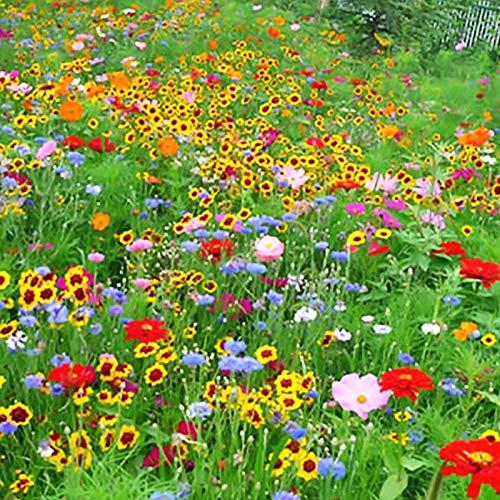HTHJA Samen saatgut winterhart mehrjährig,500 g Wildblumen-Kombinationssamen, schnell wachsende mehrjährige Wildblumen,Samen für Balkon/Garten