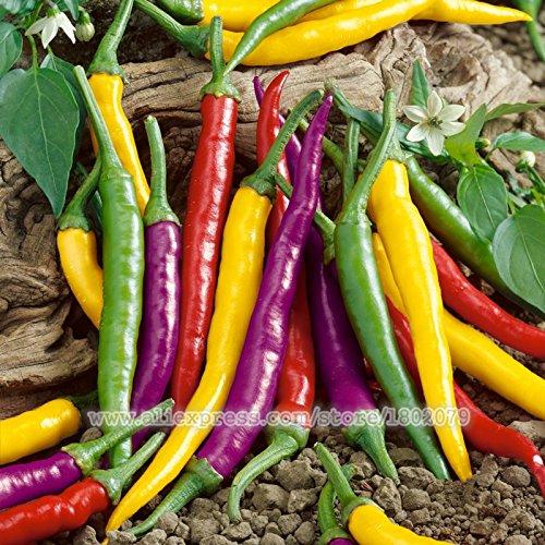 100 / sac frais géants graines de poivre piment Graines de piment légumes oignon maison jardin