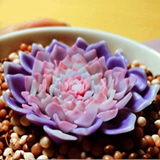 Balai 多肉植物 種子 中庭 サボテン 卓上 グリーン 癒し 造花パッケージ多肉 盆栽タネ 100粒