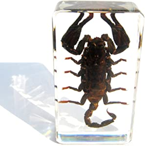 QTMY Insect in Resin Specimen Collection Paperweight for Office Desk, for Men Biology Science Teacher Kids Education (Black Scorpion)