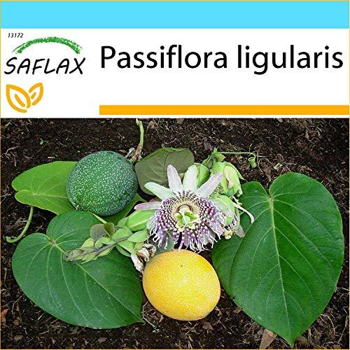 SAFLAX - Geschenk Set - Süße Granadilla - 20 Samen - Mit Geschenk- / Versandbox, Versandaufkleber, Geschenkkarte und Anzuchtsubstrat - Passiflora ligularis