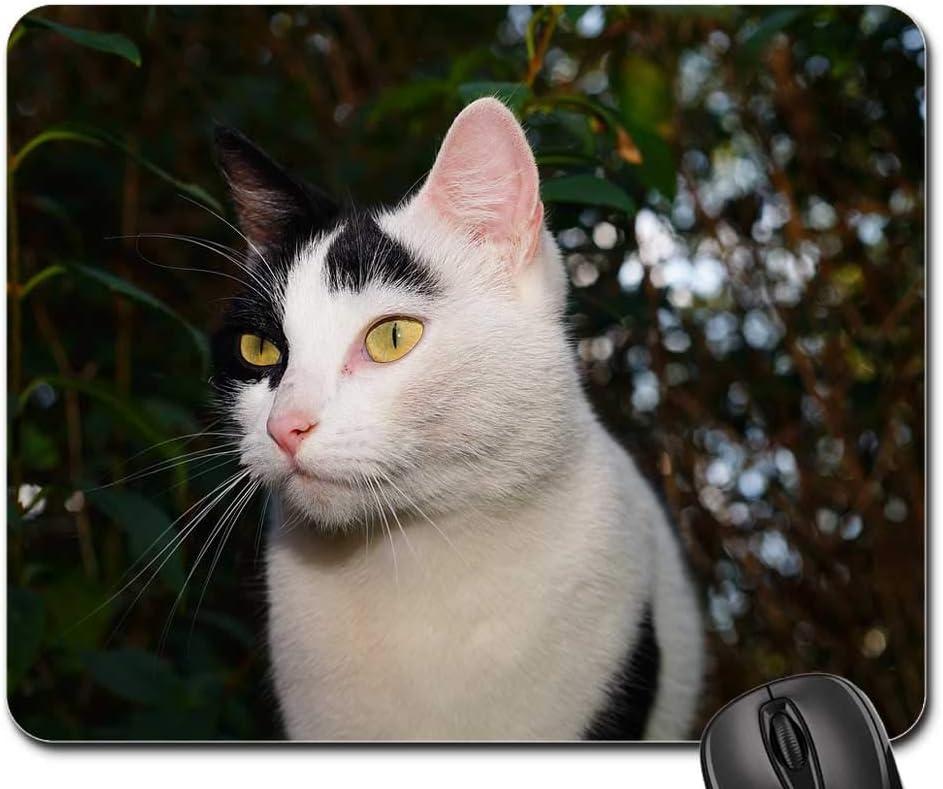 Mouse Pad - 5 ☆ popular Cat Female Animal Face Sweet Trust Domestic Pet