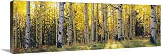 Solid-Faced Canvas Print Wall Art Print Entitled Aspen Trees in a Forest, Coconino National Forest, Arizona 36