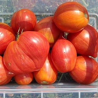 10 Samen Streak Lightning Tomate aromatische Flaschentomate