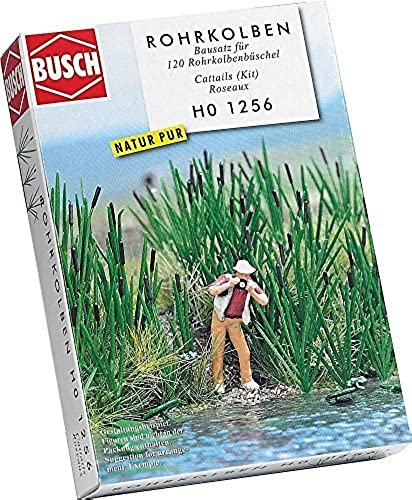 120 Bull rushes by Busch