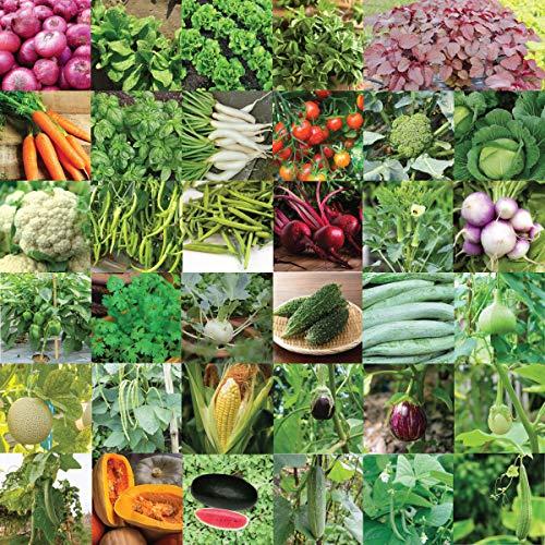 Pyramid Seeds Indian Vegetable Seeds Bank For Home Garden 35 Varieties - 1675 Seeds