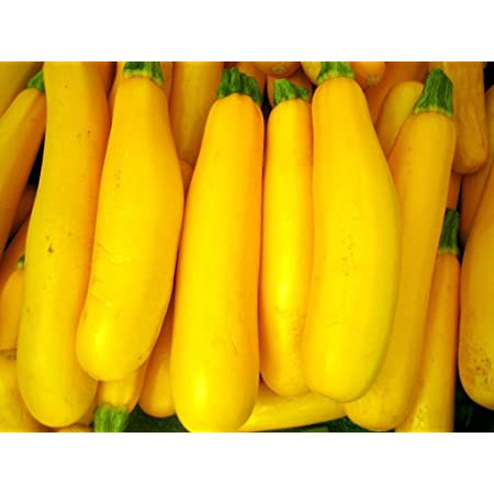 Go Green Squash Zucchini Yellow Long Seeds Pack Of 30 Seeds Amazon In Garden Outdoors