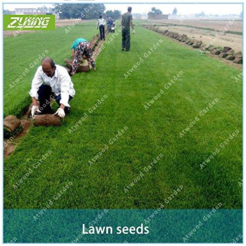 Pelouse chinois ZLKING herbe Graines en prairie Jeux Pâturage Activités de plein air haut Germination Pour jardin Prix Bonsai