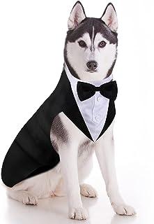 Migliori 7 Costumi per cani
