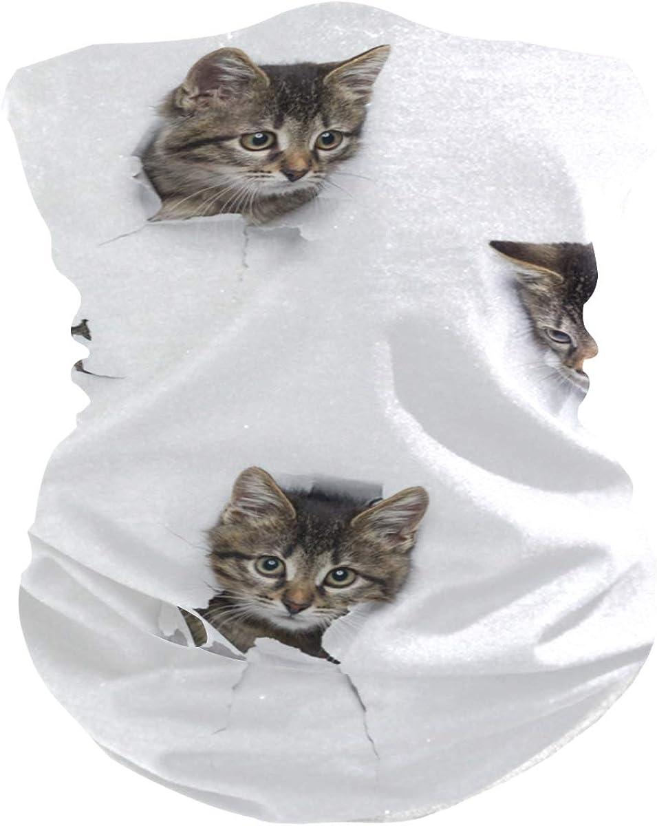 Face Mask Bandana for Women Men, Cats In Holes Neck Gaiter Balaclava Face Cover Sun Dust Mask Magic Scarf Headwear