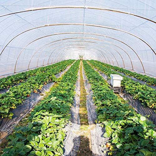 Runningfish Garden Poly Tunnel, Gardening Walk-In Polytunnel Tent, Greenhouse Plants Metal Frame Protector Roof Panels Foil Hothouse