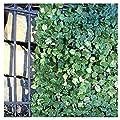 ALEKO ARLF98X39MAPLE Faux Maple Privacy Fence Screen Artificial Hedge Vine Mesh Outdoor Decorative Trellis 98 X 39 Inches Green