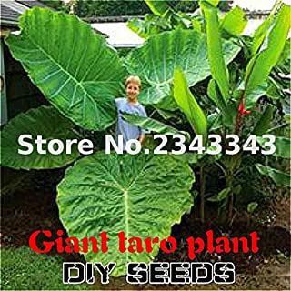 Best taro plant leaves Reviews
