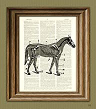 vintage horse anatomy