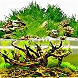 zision Aquarium Background 21' *12' Fish Tank Removaboe Sticker Double Side- Black,Blue Plants,Wood,Forest,Rock,Reef Glue
