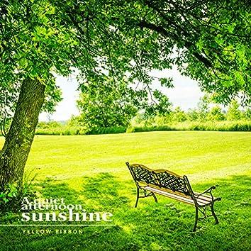 잔잔한 오후의 햇살