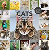 Cats on Instagram 2021 Wall Calendar: (Monthly Calendar of Adorable Internet Kitties, Photos of Cute and Funny Cats in 12-Month Calendar)