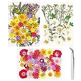 116pcs veri fiori secchi per gioielli in resina, fiori secchi pressati naturali colorati per nail art fiori secchi con pinzette per 3D fai da te ciondolo candela artigianato sapone fare arte decor