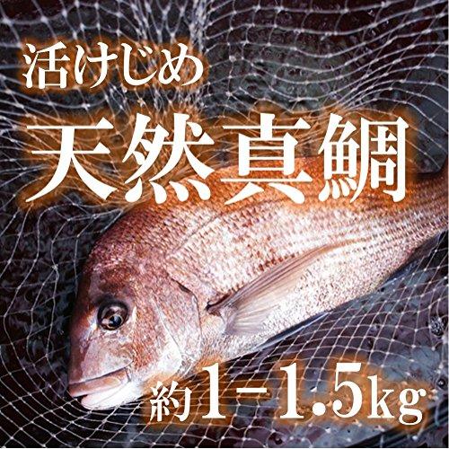 天然 真鯛 活けじめ 青森・三重・鹿児島等 約1-1.5kg 【築地直送】マダイ