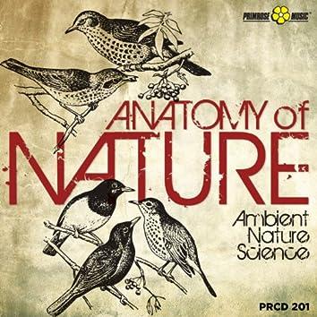 Anatomy of Nature