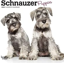 2020 Schnauzer Puppies Mini Wall Calendar, by BrownTrout