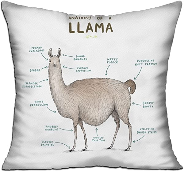 Throw Pillows Anatomy Of A Llama Include Pillow Cover And Insert Square DKRetro 18 X 18 For Decorative Couch