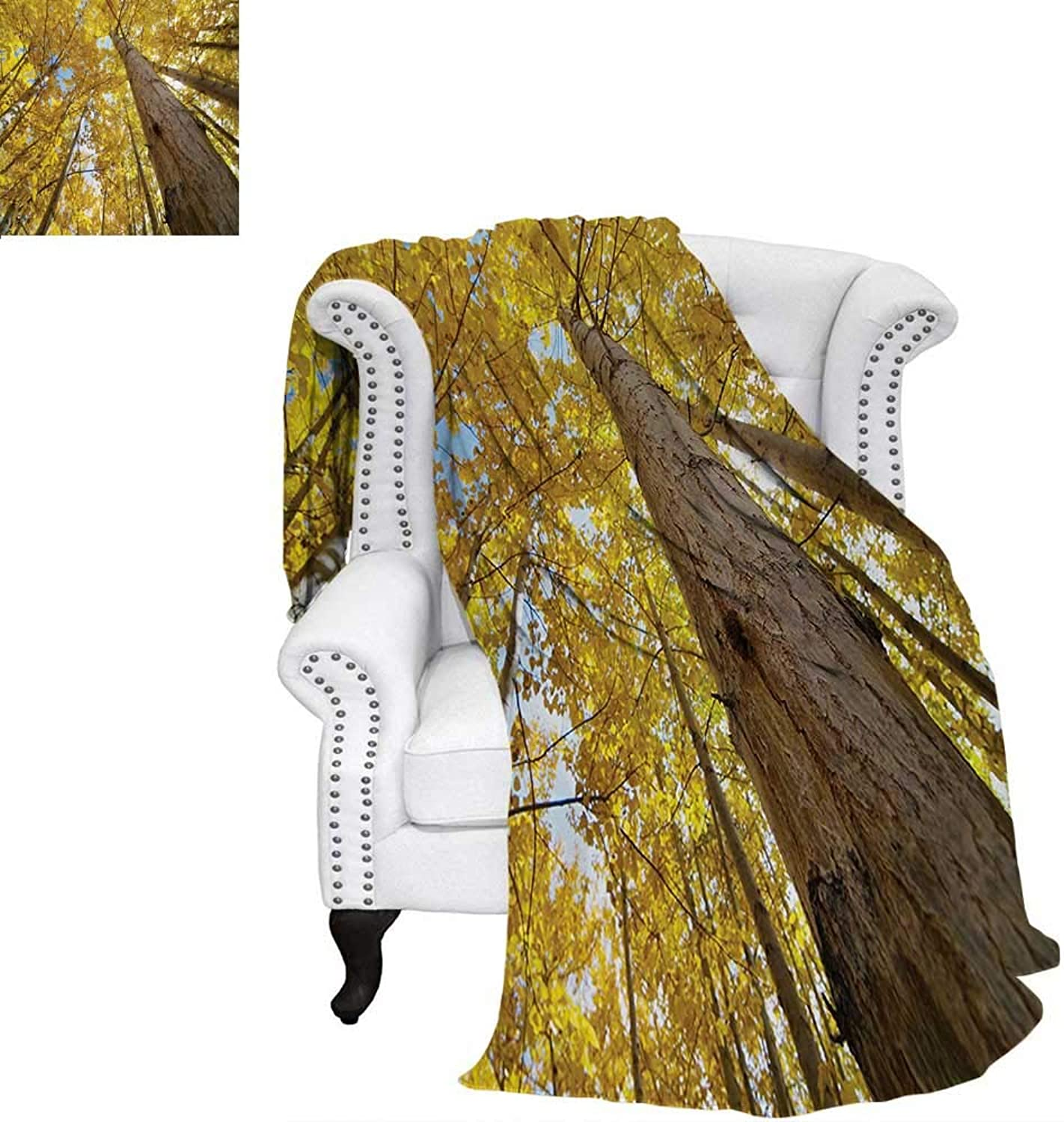 Warmfamily Nature Summer Quilt Comforter Image Up View Fall Aspen Tree Leaves in Faded Tone Autumn Season Photography Digital Printing Blanket 60 x50  Yellow
