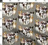 Papillon, Hunde, Hellbraun, Braun, Dreifarbig Stoffe -