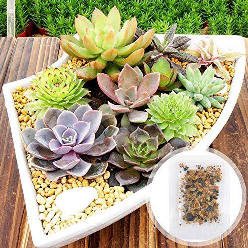 Semillas suculentas, 100pcs / bolso Semillas suculentas decorativo Beautifying frescas mezclado de los gérmenes Lithops vegetales para patio