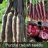 cfpacrobatics 100 pezzi di semi di carota drago viola stordimento cimelio delizioso frutto di verdure facilmente crescere, casa fattoria cortile piante, decorazione regali da giardino