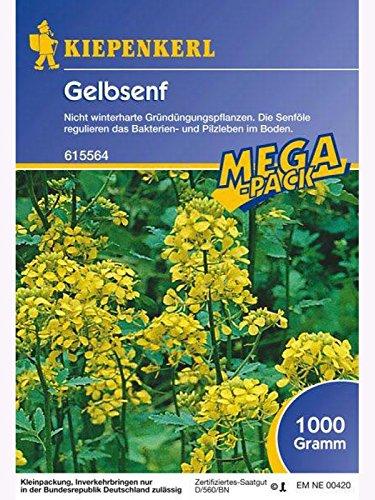Kiepenkerl Gelbsenf 1 Kg
